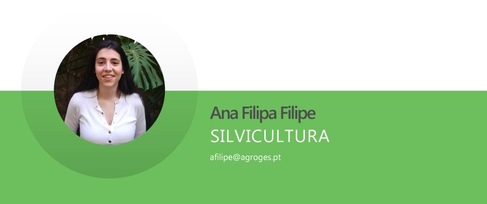 Ana Filipa Lúcio Filipe